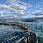 CXXX_SSC_Diving operations_aquaculture_200304 2_1
