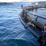 CXXX_SSC_Diving-operations_aquaculture_200304-7